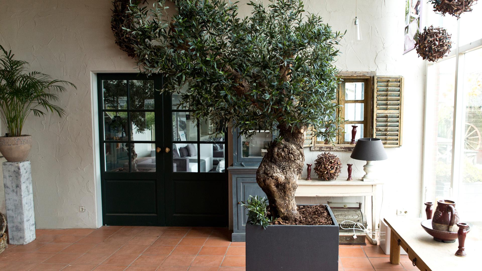 Olive Arts